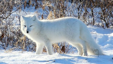 What Animals Live in Greenland?