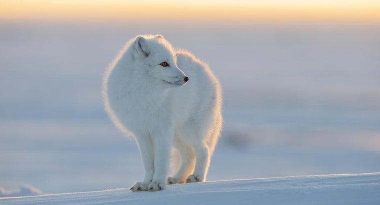 animals-live-north-pole