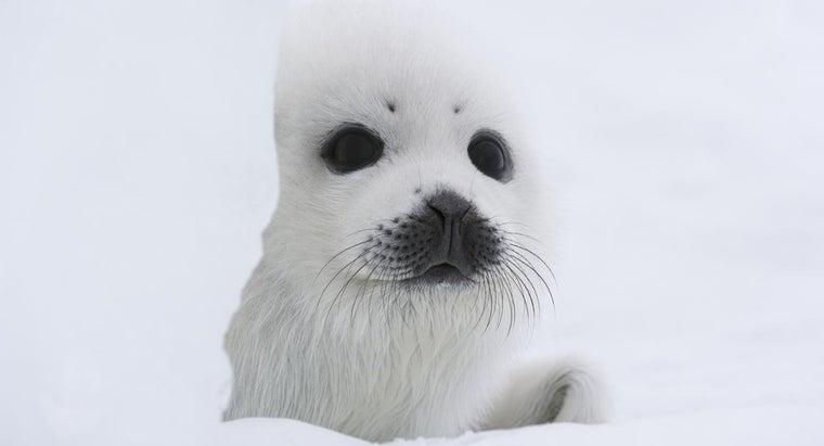 animals-live-polar-regions