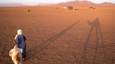 What Animals Live in the Sahara Desert?