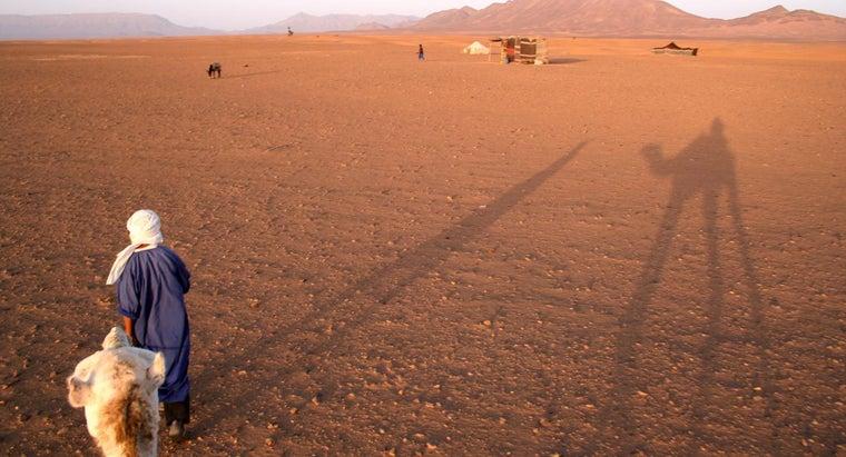 animals-live-sahara-desert