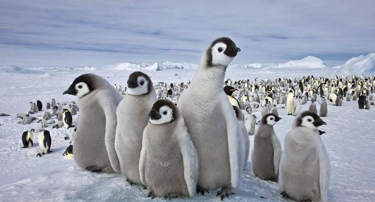 animals-live-south-pole