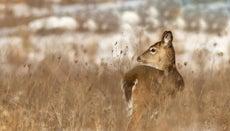What Animals Are Native to Ohio?