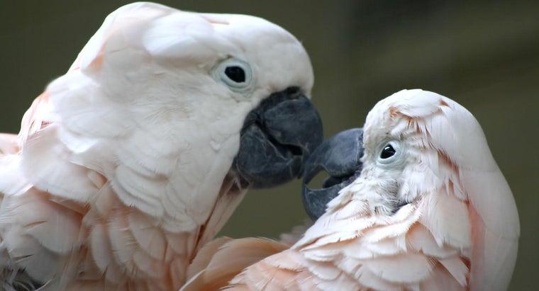 animals-reproduce