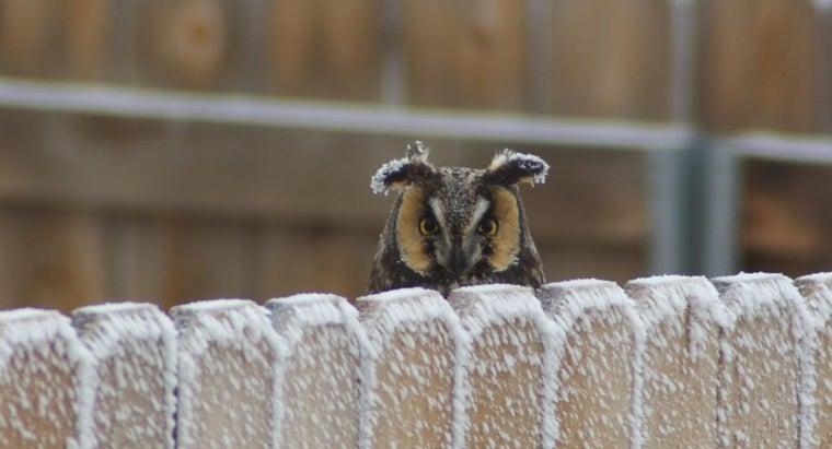 animals-snowy-owl-s-enemies