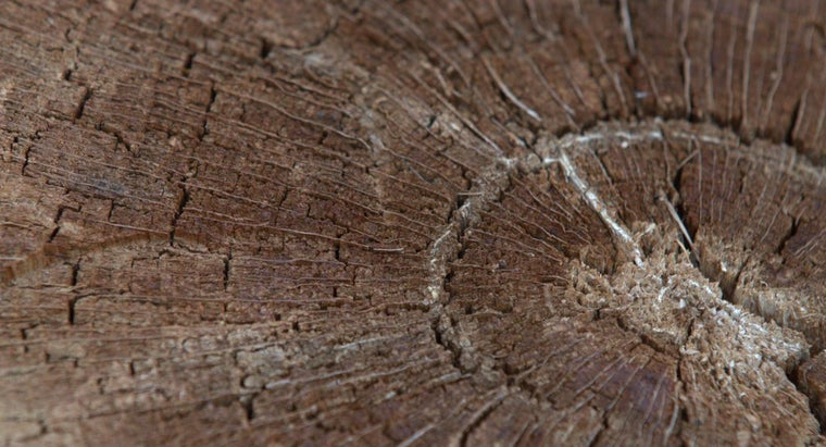 annual-rings-form-woody-stems