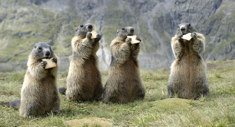 answer-much-wood-could-woodchuck-chuck