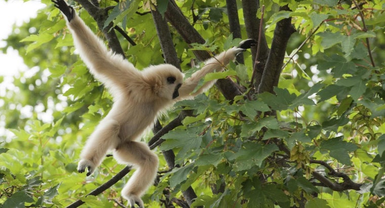 apes-live