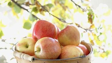 Where Do Apples Grow?