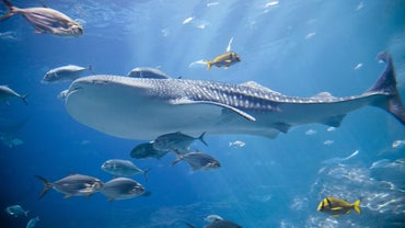 What Is the Aquarium Nitrogen Cycle?