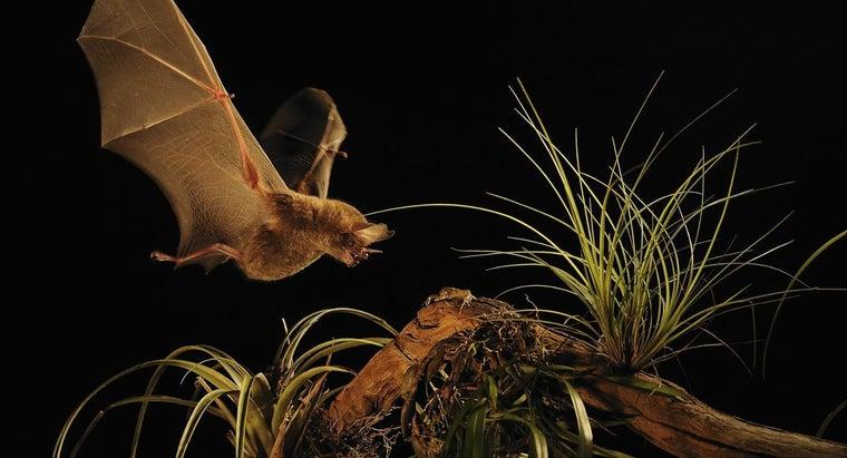 bats-omnivores