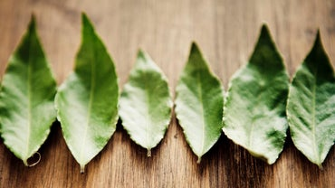 Are Bay Leaves Edible?