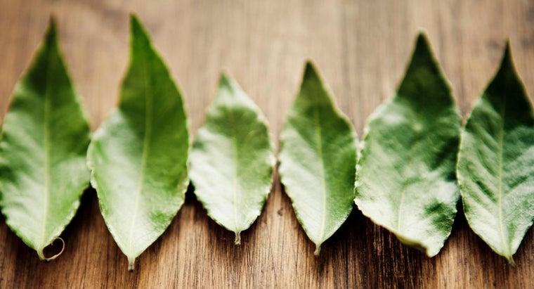 bay-leaves-edible