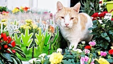 Are Bromeliads Toxic to Cats?