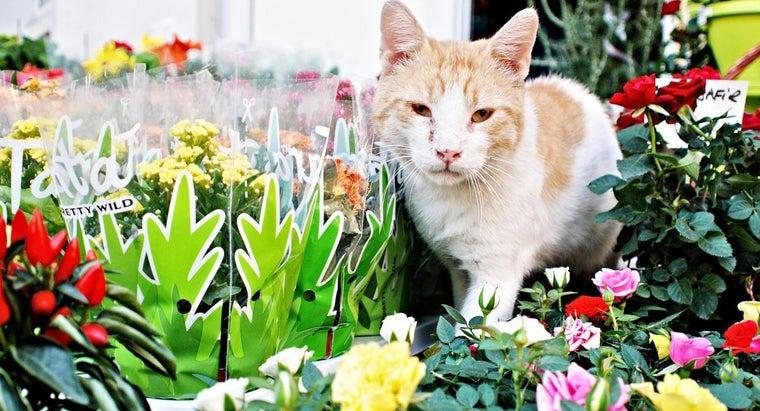 bromeliads-toxic-cats