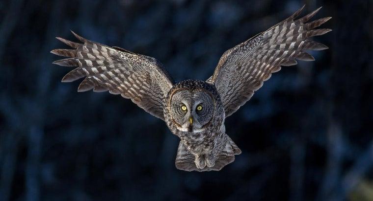owls-endangered
