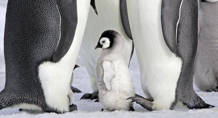 penguins-mammals