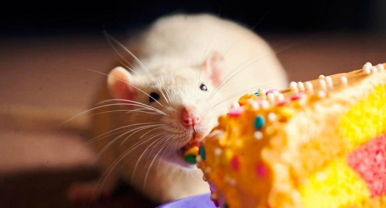 rats-mammals