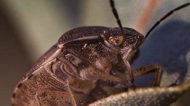 What Do Arthropods Eat?