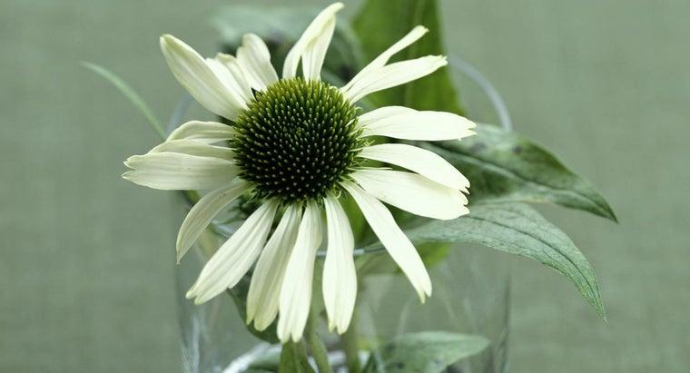 aspirin-affect-plant-growth