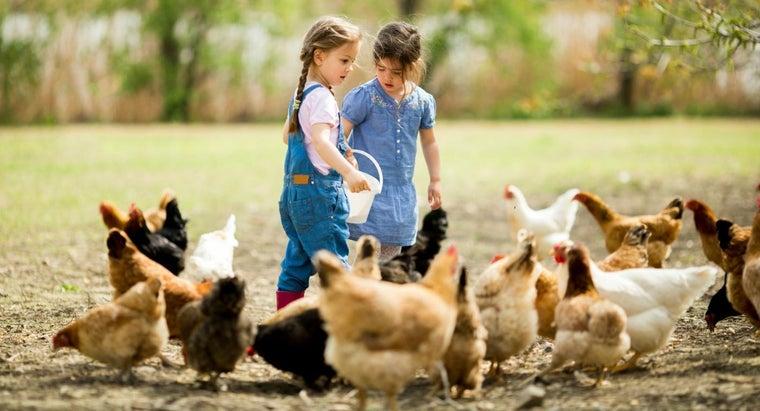 associated-costs-chicken-ranch