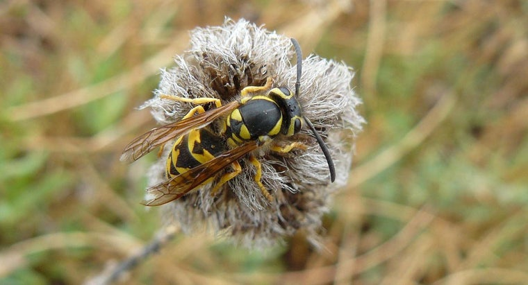 attracts-wasps