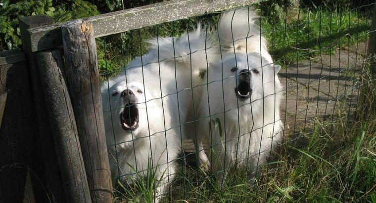 average-cost-debarking-dog