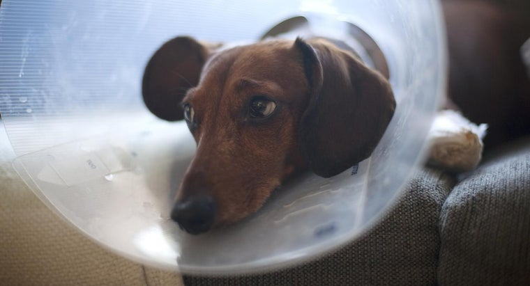 average-cost-spay-dog