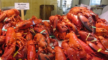 What Is the Average Life Span of a Lobster?