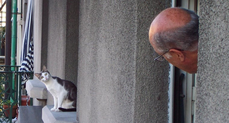 average-lifespan-cat