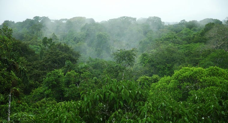 average-rainfall-amazon-rainforest