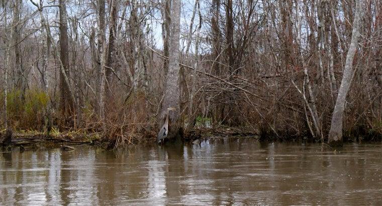 average-temperature-swamp