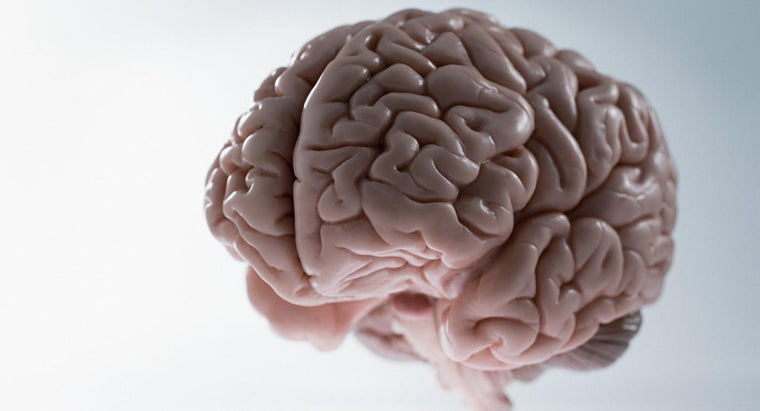 average-weight-human-brain