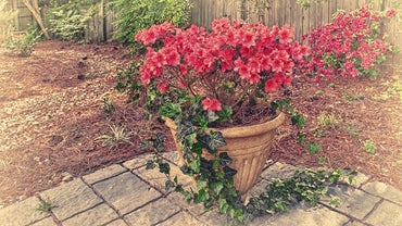 What Is an Azalea Pot?