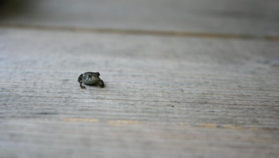 What Is a Baby Frog Called?