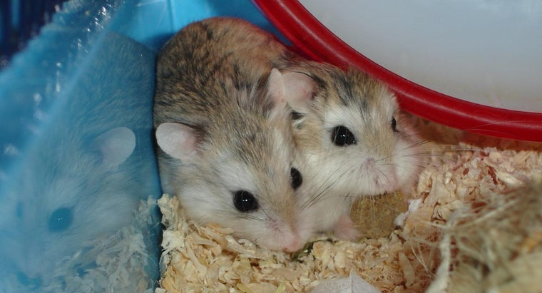 baby-hamsters-called