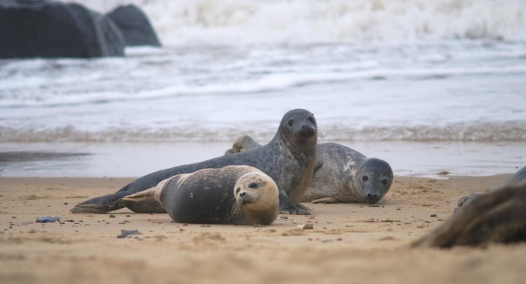 baby-seals-called