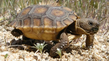 What Is a Baby Tortoise Called?