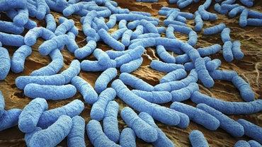 How Do Bacteria Breathe?