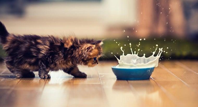 bad-cats-drink-milk
