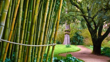 Is Bamboo Poisonous to Humans?