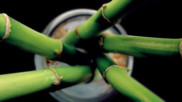 How Does Bamboo Reproduce?