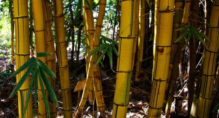 bamboo-stalks-turn-yellow