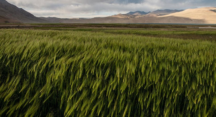 barley-grass-good