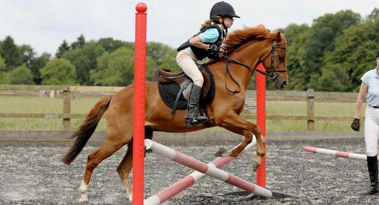 basic-steps-learning-horse-jumping