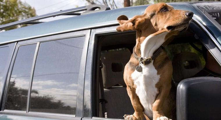 basset-hounds-smell-bad