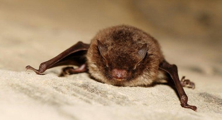 bats-eat