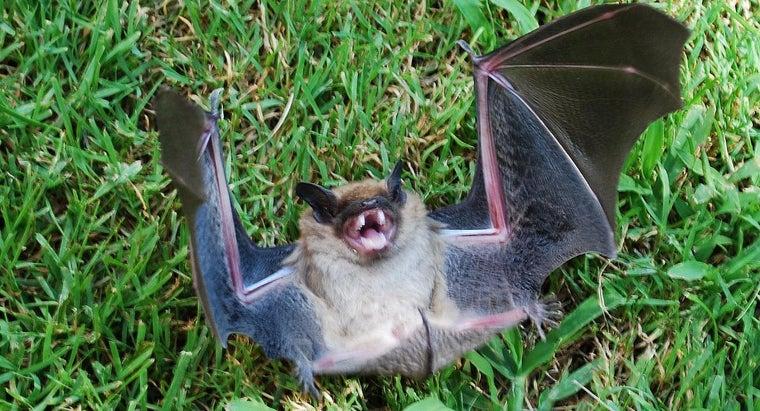 bats-out-house