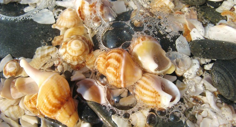 beaches-seashell-collecting