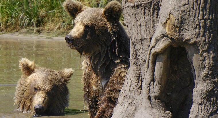 bears-reproduce